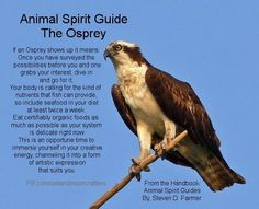 seagull spirit guide meaning
